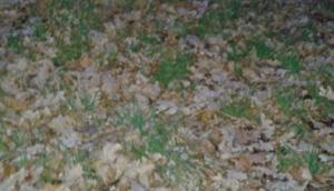 Laub auf der Weide